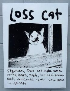 post of lost cat